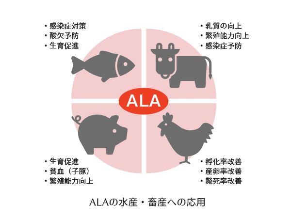 ALAの水産・畜産への応用
