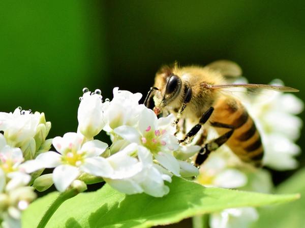 ミツバチの住処