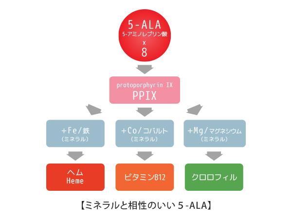 ミネラルと相性のいい5-ALA