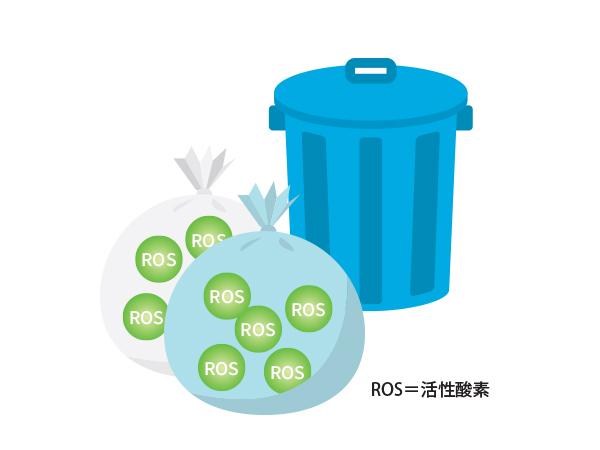 ROS=活性酸素