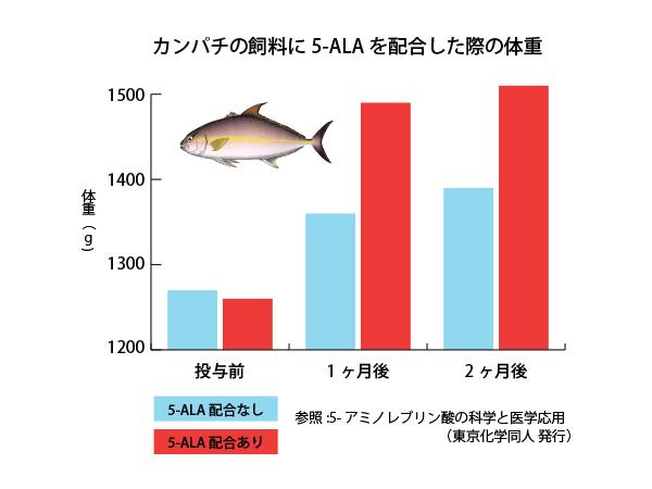 カンパチの飼料に5-ALAを配合した際の体重のグラフ