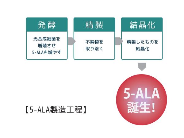 5-ALA製造工程